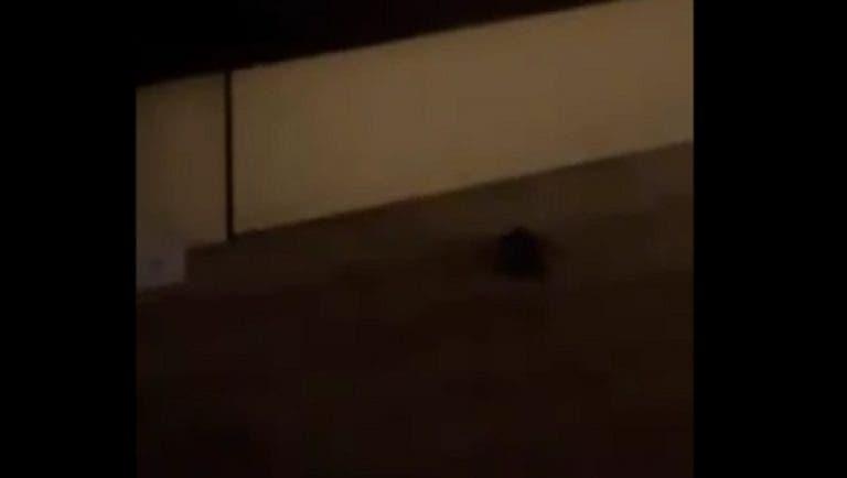 Surreal: Putintseva troca de quarto e encontra… outro rato em Melbourne